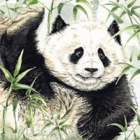 Greetings card, giant panda