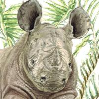 Greetings card, black rhino