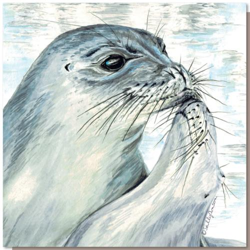 Greetings card, kissing seals