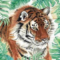 Greetings card, Bengal tiger