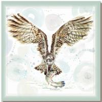 Greetings card, osprey